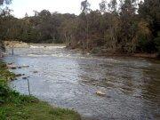 Yarra River from bike trail