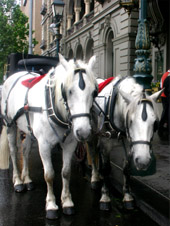 Melbourne Hotel Horses