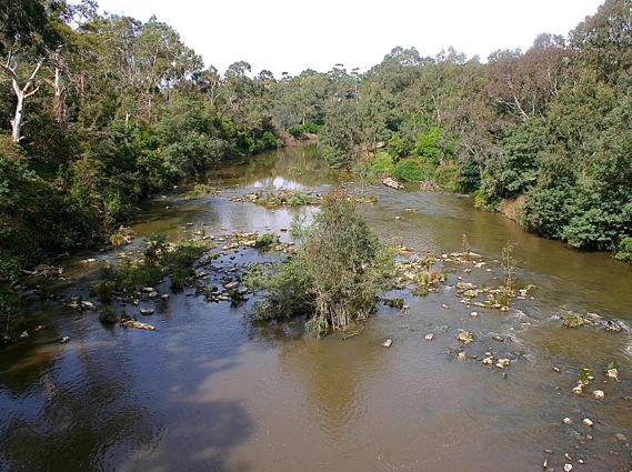 The Yarra River from the bike path