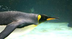 King Penguins Melbourne Aquarium