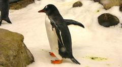 penguin melbourne aquarium
