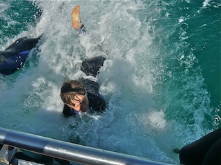 dolphin swim Melbourne